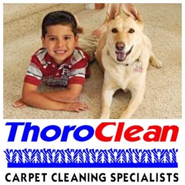 How Do You Get Dog Vomit Smell Out Of Carpet