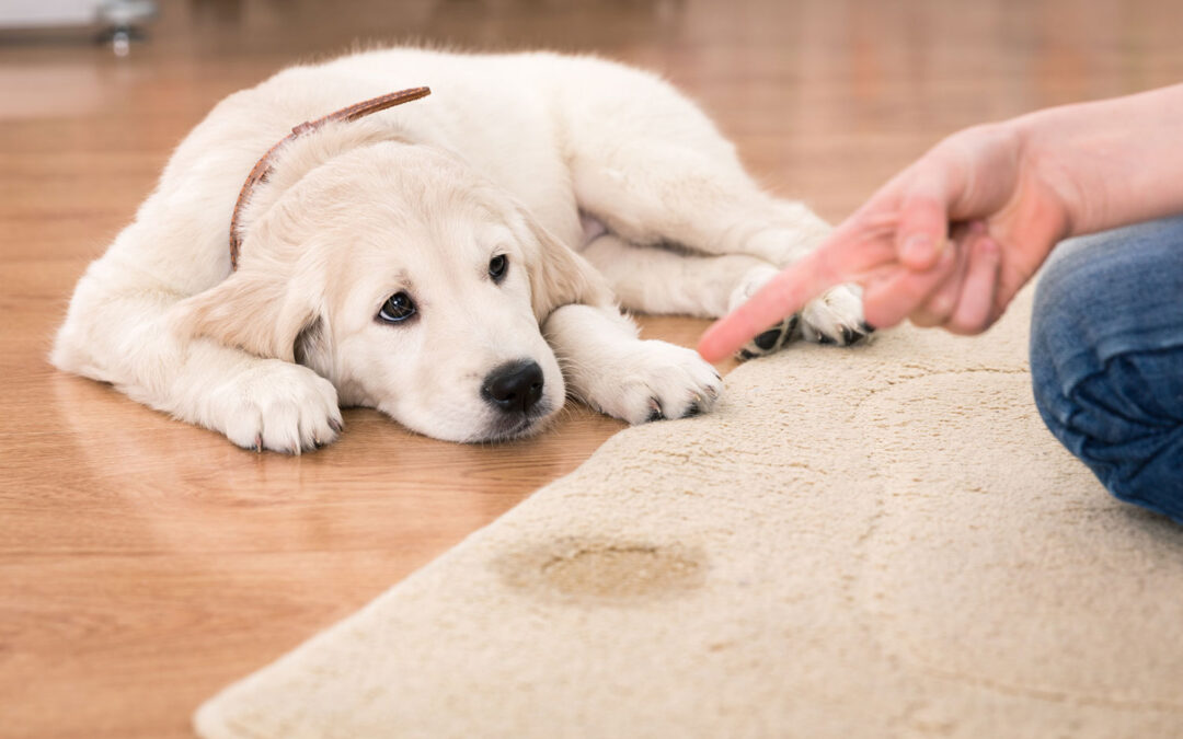 Pet-Stain-and-Odor-Removal