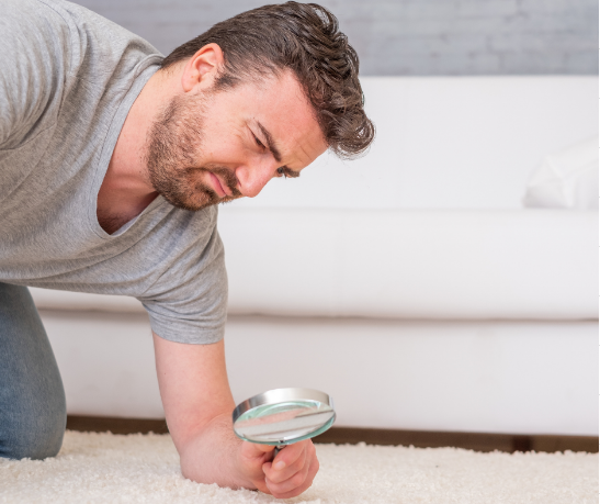 How Much Dust Is REALLY In Your Carpets?